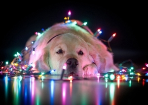 dog and lights