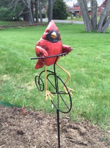 biking bird