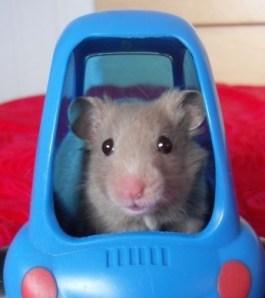 mouse car
