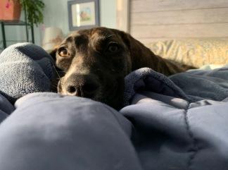 bed comfy